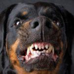 Валентин Катасонов о «свинском сословии» и прочих «зверях»