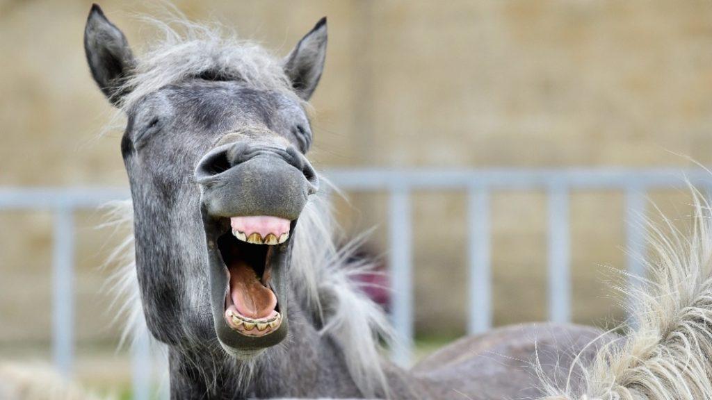 07-лошадь